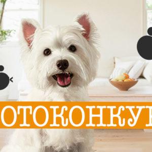 I (дистанционный) Городской конкурс фотографий «Мой любимец»